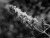 Flower_web