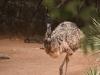 emu_web
