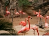 flamingoes_web